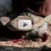 """Documentarul """"Pământenii"""", proiectat pentru a doua oară în cadrul """"International Vegetarian Week"""""""