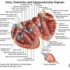 AgenţiadeCarte.ro susţine campania naţională împotriva infarctului de miocard