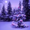 Târg pentru un Crăciun tradiţional, în Parcul Obor