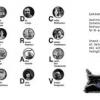 Gabriela Adameşteanu, Adriana Babeţi, Nora Iuga, Dan Lungu, Lucian Dan Teodorovici, la Salonul Internaţional de Carte de la Torino, ediţia a XXIV-a