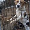"""""""Ziua internaţională a eliberării animalelor"""", sărbătorită printr-un marş"""