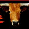 "România serbează ""World Animal Day/ Ziua Animalelor"""