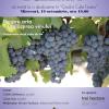 Discuţii şi degustare de vin la Clubul Dilema Veche