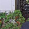 """Peter Sragher, invitatul lunii martie la """"Scriitori la TRADEM"""""""