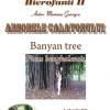 """""""Hierofanii II. Arborele călătorului. Banyan tree. Ficus benghalensis"""" de Mariana Gorczyca"""
