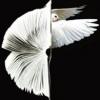 România, invitată de onoare la Salon du Livre – Salonul Internațional de Carte de la Paris 2013