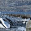 """""""Leviathan"""" – filmul anului în Rusia, nominalizat la Oscar, la cinema"""