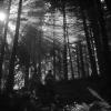 """""""Oamenii muntelui"""", film recompensat la Festivalul de la Veneția (1942), la Cinemateca Eforie"""