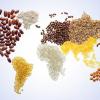 "România, la ""World Market – food and culture Praga"""