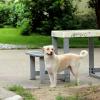 "Despre filmul ""How I Miss Bucharest or The Journey of a Dog's Life"", la Galeria Christine König din Viena"