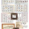 Tirbușoane de colecție pe timbrele celei mai noi emisiuni Romfilatelia