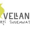 """Cărțile Editurii Vellant, finaliste la """"Cele mai frumoase cărți""""- ediția 2016"""