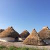 """Despre """"Case din Banat de acum 7000 de ani și cărți de lemn"""", la Timișoara"""