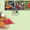 """Beneficiile naturii ilustrate pe mărcile poştale: """"Fructe de pădure"""""""