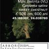 """O nouă serie de trei conferințe susținute în cadrul expoziției """"Arbori bătrâni"""""""
