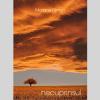 """Necuprinsul"", de Mariana Filimon"